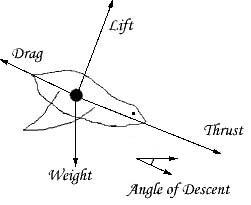 Vertebrate Flight: Introduction