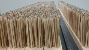 Pencils spread word about invasive pathogen