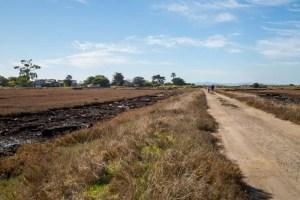 Mudflows make Carpinteria Salt Marsh a study in recovery