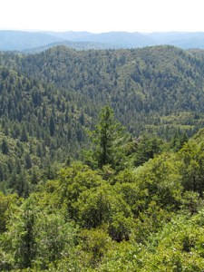 This forested, soil-mantled landscape near the Eel River Critical Zone Observatory is typical of the Northern California coast range. Image credit: Danielle Rempe