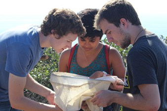 Three students examine the contents of a butterfly net at Scripps Coastal Reserve.