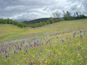 wildflower diversity