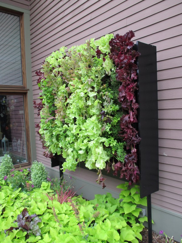 Vertical Wall Vegetable Garden