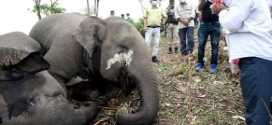 Killing 18 bulky animals by lightning an absurd argument : Assam engineers' forum