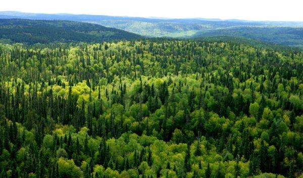 jenis jenis hutan