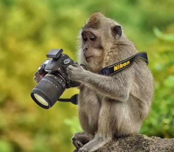 74 Koleksi Gambar Binatang Lucu Lagi Galau HD