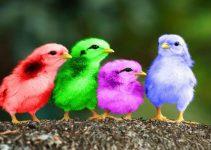 Jenis-jenis ayam