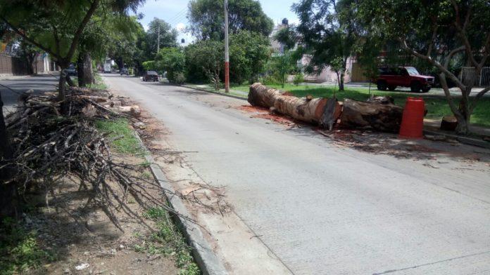 evitar tala de árboles