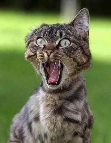 Gambar Marah Lucu : gambar, marah, Gambar-lucu-kucing-lucu-lagi-marah, UDien, D'kab
