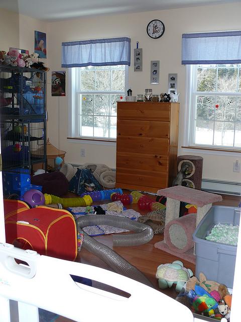 Квартира любителя хорьков. Фото
