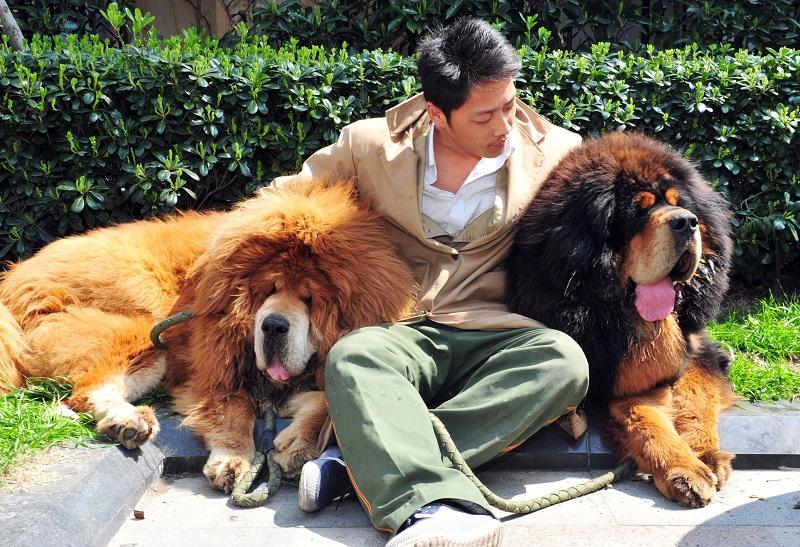 номеров самые дорогие животные в мире фото туле