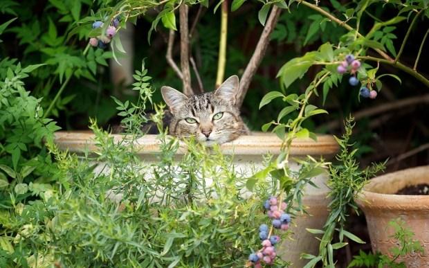 Коты-флористы. Фото