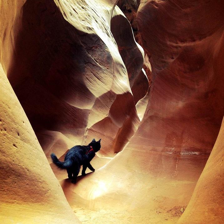 Милли - кошка-скалолаз из штата Юта, США. Фото