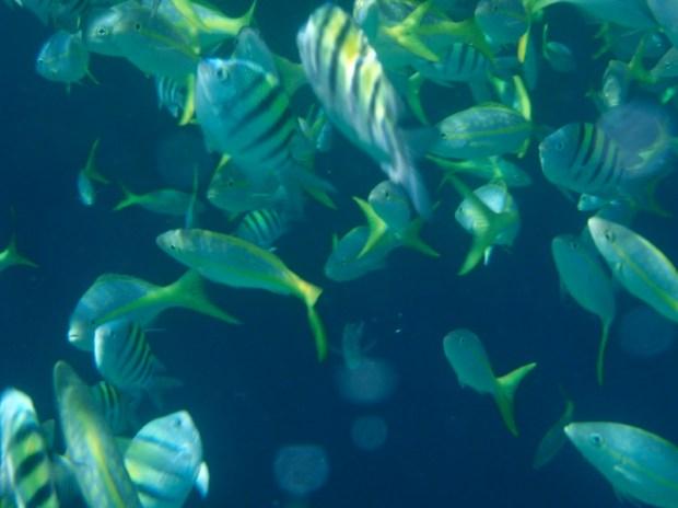 Подводная съемка у берегов Кайо-Санта-Мария. Куба. Фото