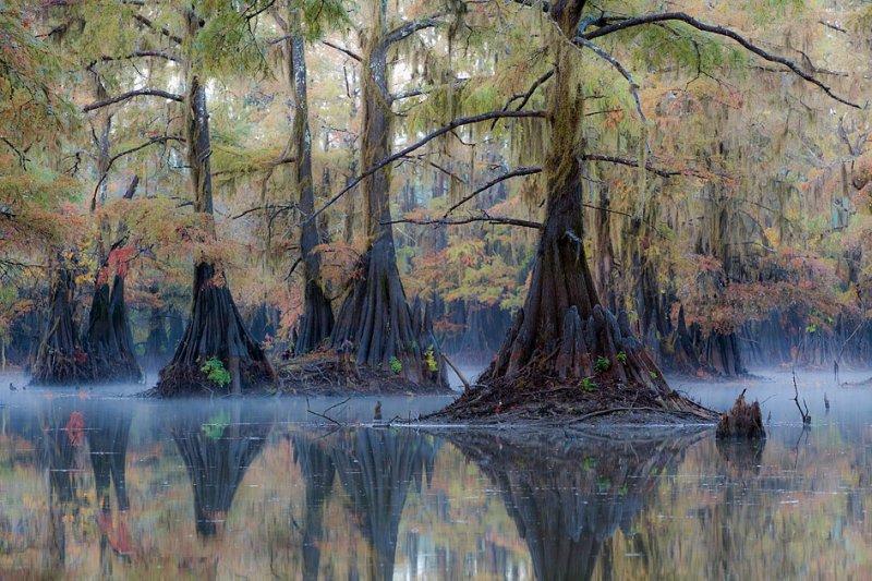 Красивые кипарисы осенью. Озеро Каддо в Техасе. Фото