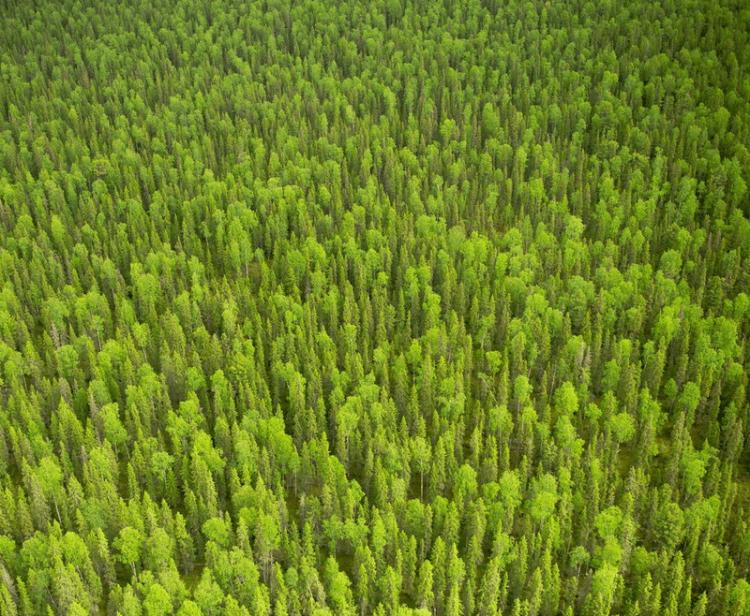 Заповедники Республики Коми. Леса. Фото
