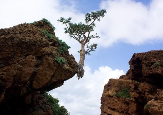 Необычная природа архипелага Сокотра. Фото