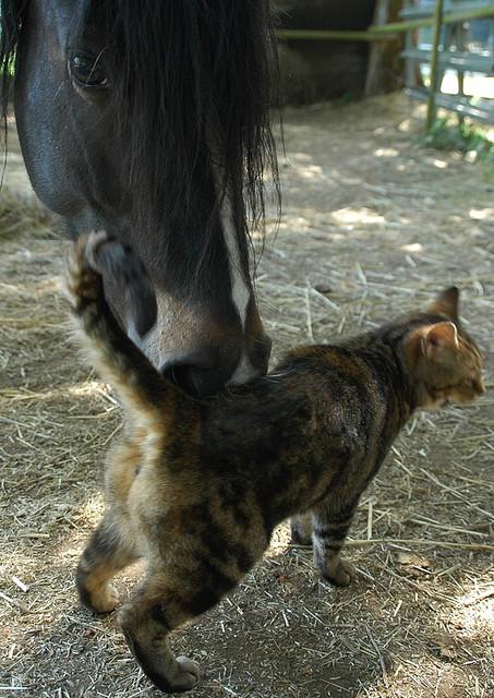 Дружба животных. Лошадь и кот
