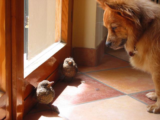 Дружба животных. Собака и птички