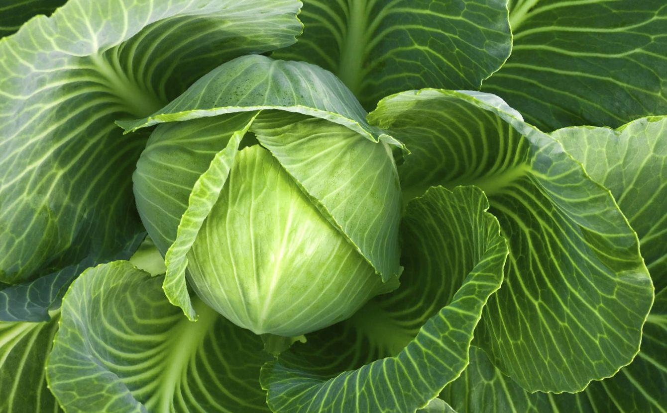 Кемира картофельное. Минеральные удобрения Кемира: виды и особенности применения