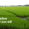 गट शेती : कमी जागा असलेल्या शेतकऱ्यांसाठी उत्तम संधी