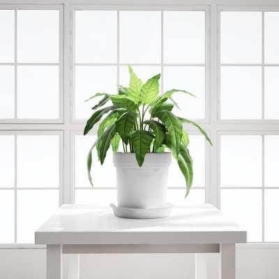 Chocofur_House_Plant