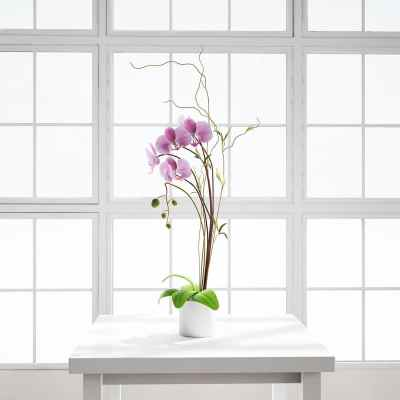 Chocofur_Orchid