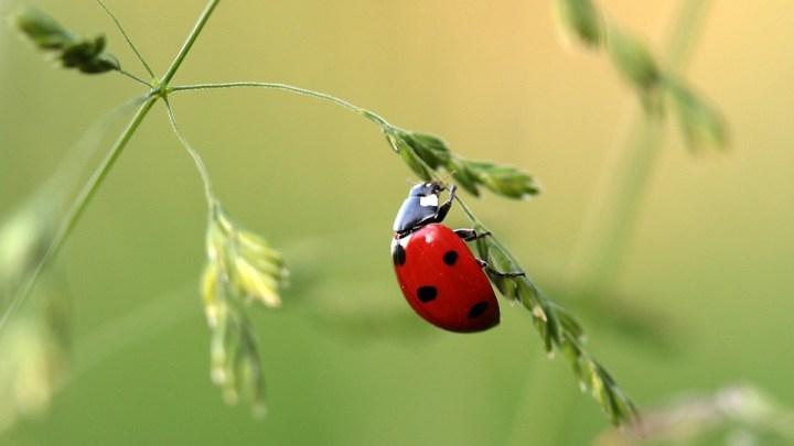 """Land Niedersachsen und Kommunen stellen Aktionsprogramm für mehr Insektenvielfalt vor: """"Beste Zeit, anzufangen, ist jetzt"""""""