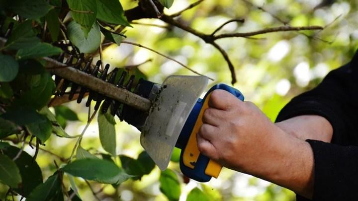 Heckenpflege: Herbst und Winter für Arbeiten nutzen
