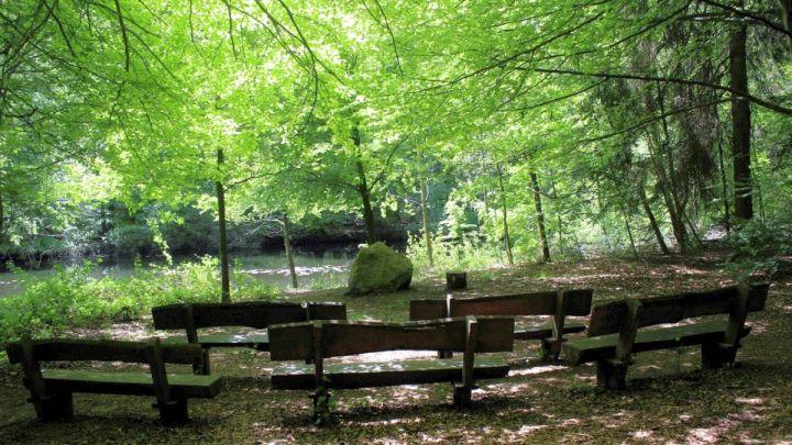 Uelzener Bestattungswald soll größer werden – Nachfrage für Baumbestattungen weiterhin hoch