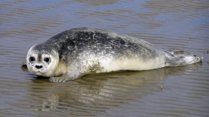 Neuer Rekord bei Seehundzählung – Bilanz der Zählflüge im UNESCO Weltnaturerbe Wattenmeer zwischen Ems und Elbe
