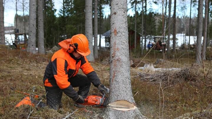 Wo Baumfällungen nicht zu vermeiden sind – AGL und Stadt informieren im Internet