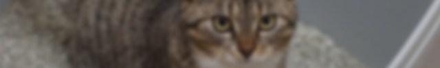 Uretrostomía en el gato obstruido. Puntos claves para no fracasar (VET0118)