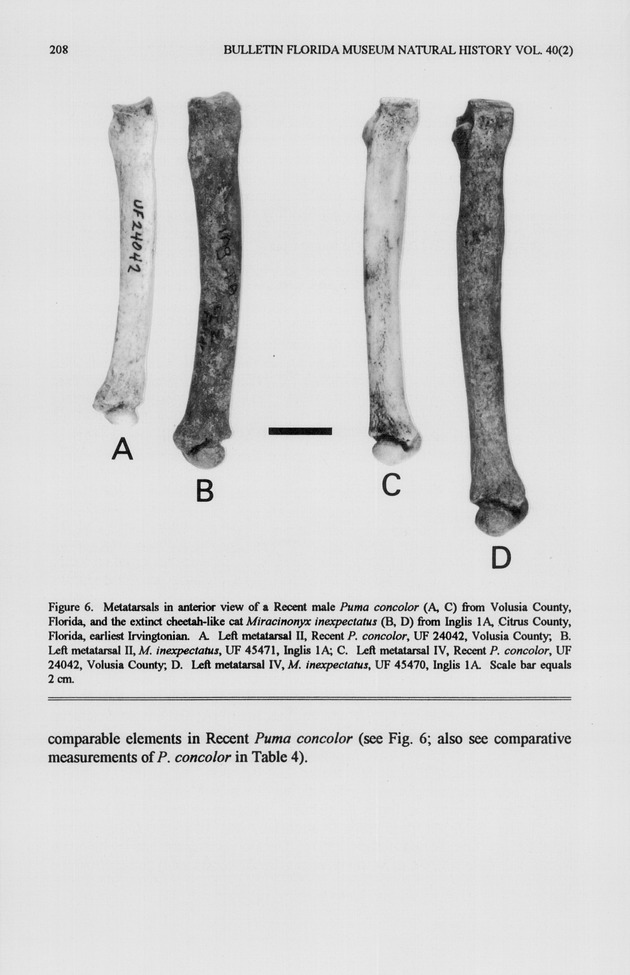 Fossil history of the panther (Puma concolor) and the cheetah-like cat (Miracinonyx inexpectatus) in Florida - Page 208