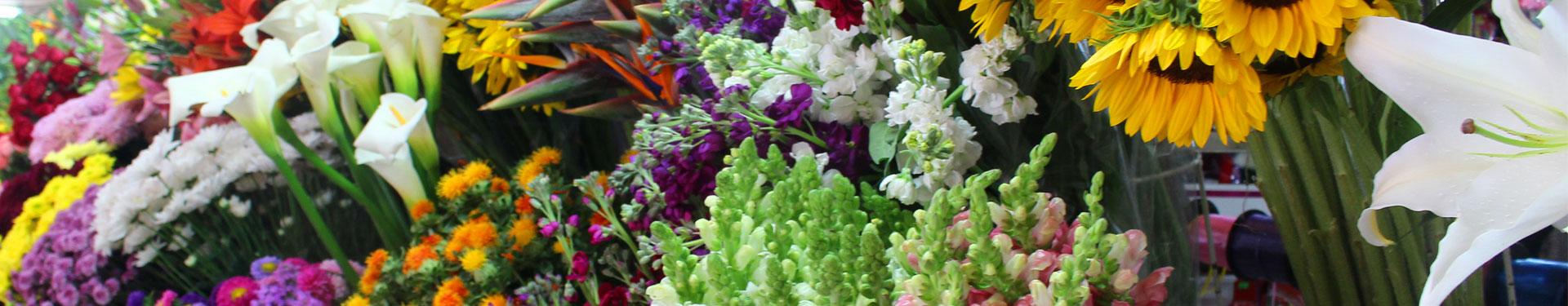 Fleurs - Plantes UFE Pérou