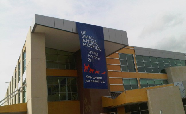 Uf Small Animal Hospital Plans Grand Opening Public Sneak Preview In October Uf Health