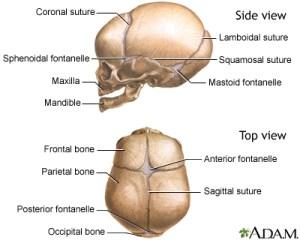 Sutures  ridged | UF Health, University of Florida Health