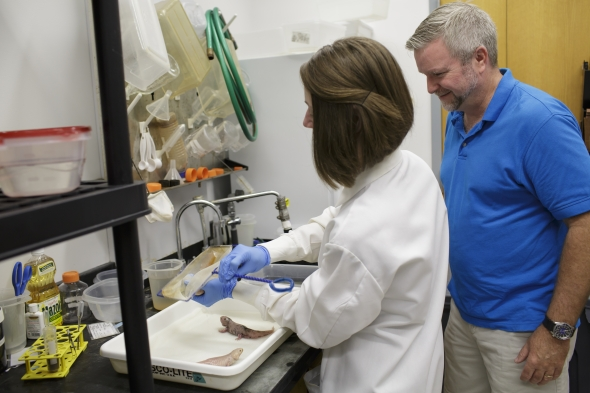 Scrutinizing salamanders to study scarring in humans  UF