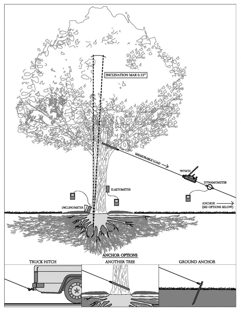 PiCUS: TreeQinetic