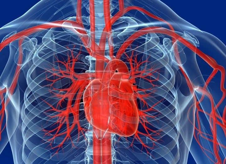 kakie sosudy proveryat neobhodimo - Comment vérifier les vaisseaux sanguins du corps indications pour de telles études