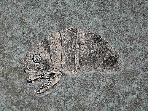 crotton maxi