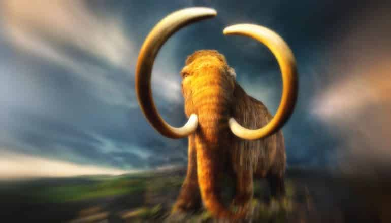 mammoth resurrection