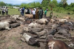Mvomero7 - Mapigano ya wakulima na wafugaji wilayani mvomero yaibuka tena na kuua ng'ombe 79 na mtu mmoja