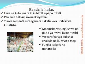 chicken management swahili 004 300x225 - Ufugaji wa kuku kwa njia ya kisasa