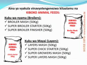 chicken management swahili 007 300x225 - Ufugaji wa kuku kwa njia ya kisasa
