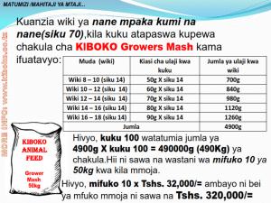 chicken management swahili 011 300x225 - Ufugaji wa kuku kwa njia ya kisasa