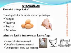 chicken management swahili 002 300x225 - Ufugaji wa kuku: Namna ya kuanza na mchanganuo wa mapato na matumizi