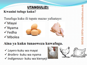 chicken management swahili_002