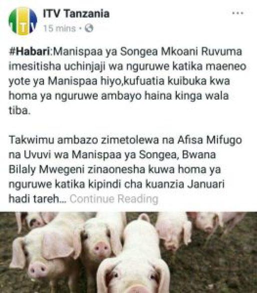 photo 2018 03 26 14 18 43 263x300 - Homa ya Nguruwe bado tishio Songea, imeua Nguruwe 864