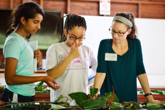 Students consult with Hannah, resident naturalist, about whether or not to sort a leaf as monocot or dicot.